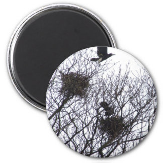 Flight of the Crow Magnet
