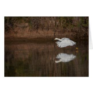 Flight of the Snowy Egret Card