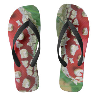 FlipFlop's from the summer to the late autumn! Flip Flops