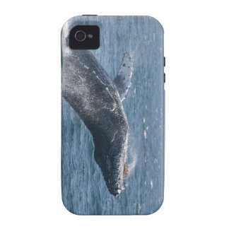 Flipping the Whale iPhone 4 Covers
