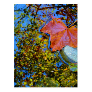 floating fall leaf on rock postcard