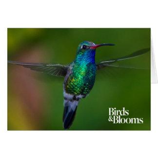 Floating Hummingbird Card