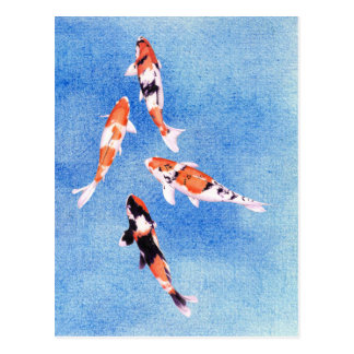 Floating Koi blue Postcard