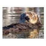 Floating Otter Postcard