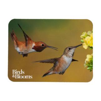Floating Rufous Hummingbird Magnet