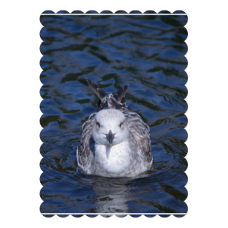 Floating Seagull Card