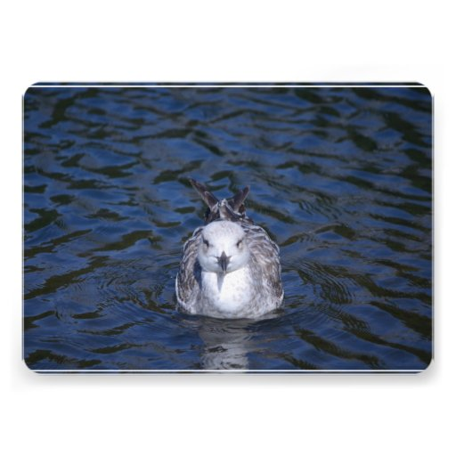 Floating Seagull Personalized Invitation
