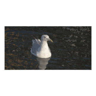 Floating Seagull Personalized Photo Card