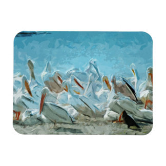 Flock of American White Pelicans and Friend Magnets