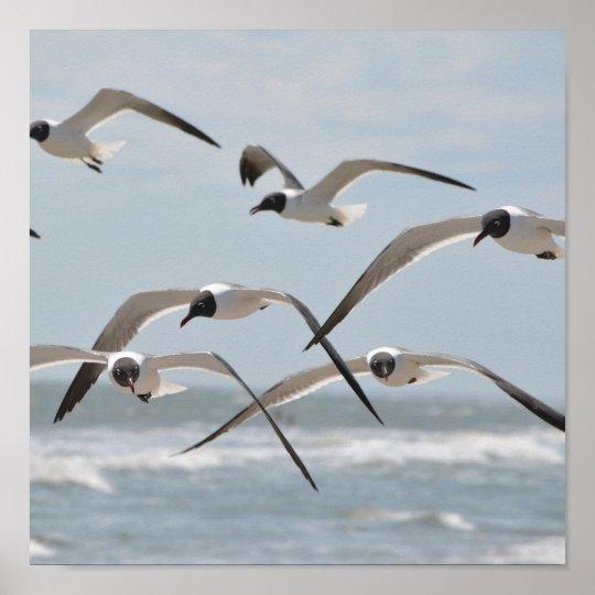 Flock of Beach Seagulls Flying near Ocean Poster