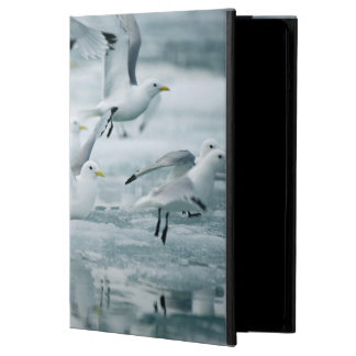 Flock of Black-legged Kittiwakes Case For iPad Air