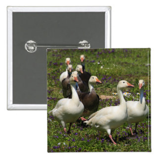 Flock of Ducks 15 Cm Square Badge