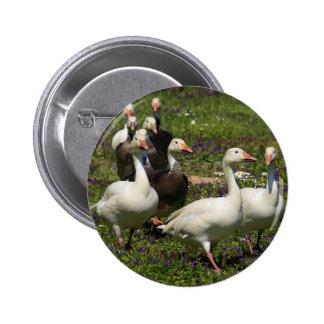 Flock of Ducks 6 Cm Round Badge