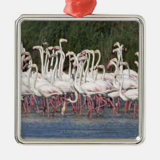 Flock of flamingos wading , France Christmas Ornament