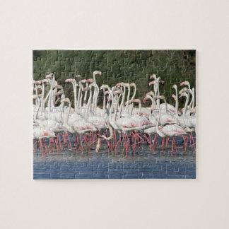 Flock of flamingos wading , France Jigsaw Puzzle