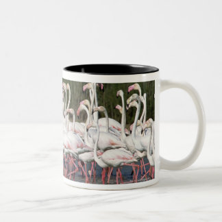 Flock of flamingos wading , France Two-Tone Coffee Mug