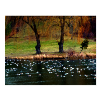 Flock of Geese Weeping Willows Postcard