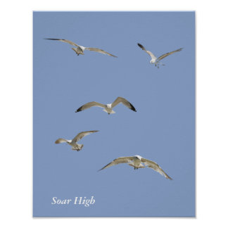 Flock of High-Flying Seagulls Poster