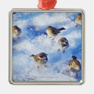 Flock of House Sparrows 'Passer domesticus' on Christmas Ornament