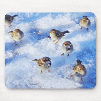 Flock of House Sparrows 'Passer domesticus' on Mouse Mat