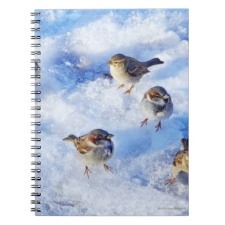 Flock of House Sparrows 'Passer domesticus' on Notebook