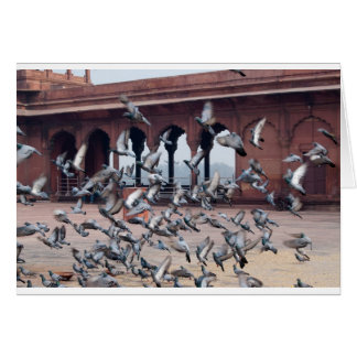 Flock of pigeons greeting card