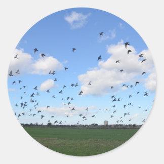 Flock Of Pigeons Round Sticker