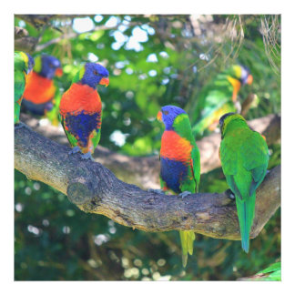 Flock of Rainbow lorikeets on a branch of a Tree Photograph