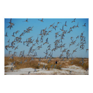 Flock of Seagulls on the Florida Beach Poster