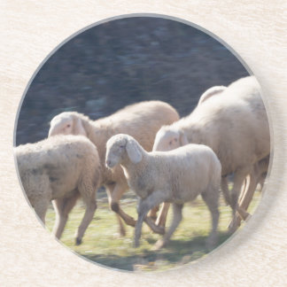 flock of sheep coaster