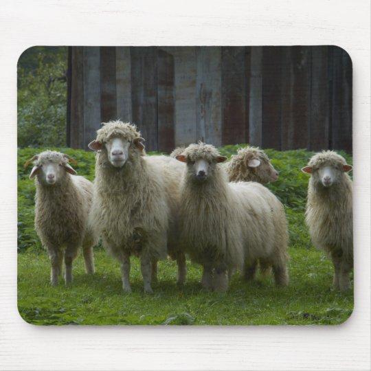 Flock of Sheep   Farmland Mouse Mat