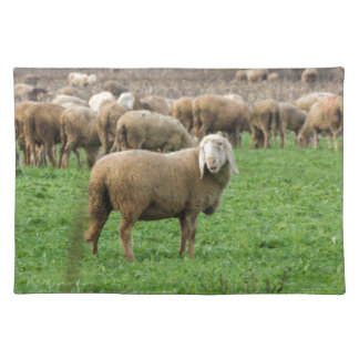 flock of sheep placemat