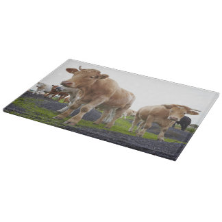 Flock of young white cows in Scottish field Cutting Board