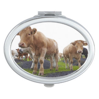 Flock of young white cows in Scottish field Makeup Mirror