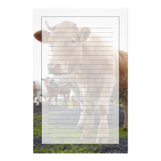 Flock of young white cows in Scottish field Stationery
