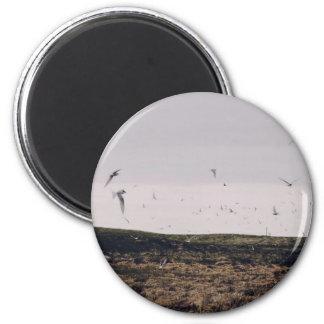 Flock Themed, A Flock Of White Birds Burst Into Fl 6 Cm Round Magnet
