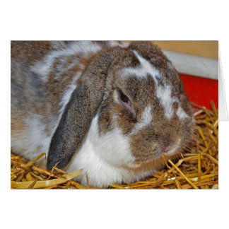 Floppy eared bunny greeting card