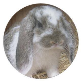 Floppy Ears Rabbit Dinner Plates