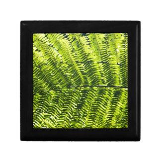 Flora Dominica 5 Gift Box