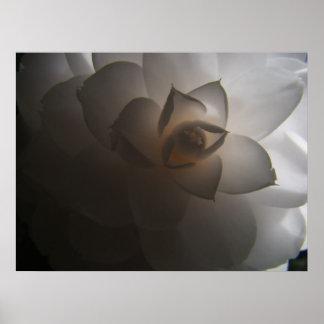 Flora Dramatica Poster