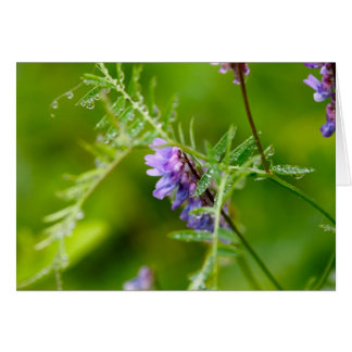 Flora on Grand Manan Greeting Card