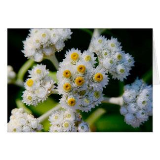 Flora on Grand Manan, NB Greeting Card