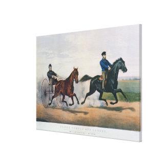 Flora Temple' and 'Lancet' Canvas Print