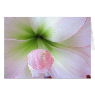 """Flora Tenera"" Card"