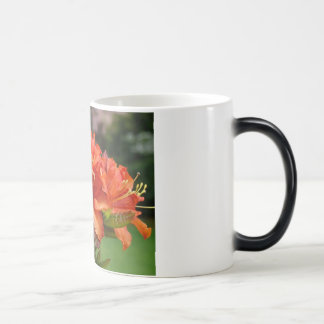 Floral AZALEA FLOWERS 14 Azaleas Cards Gifts Mugs