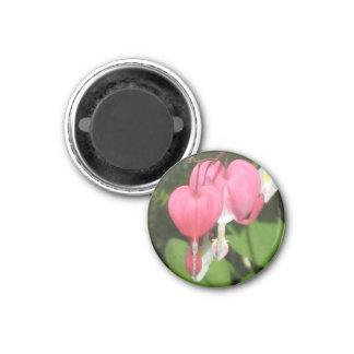Floral Bleeding Heart Small Round Fridge Magnet