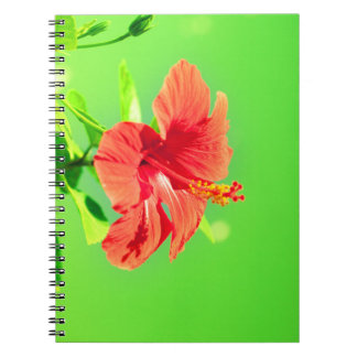 floral collection. Hibiscus Spiral Note Books