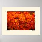 Floral Coral - Bonaire Poster