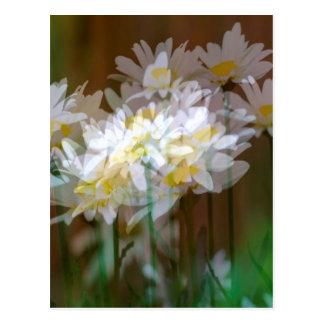 Floral Fantasies Postcard