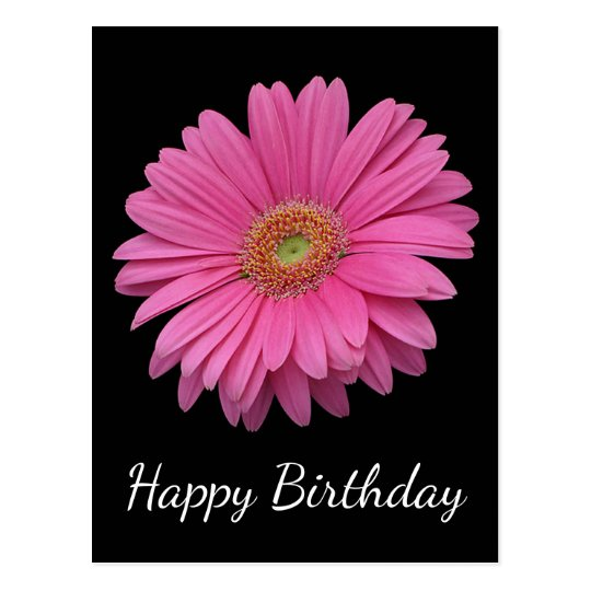 Floral Happy Birthday Pink Gerbera Daisy Black Postcard